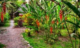 Voetpad in tropische tuin royalty-vrije stock fotografie