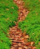 Voetpad van droge bladeren tussen klavers Stock Foto
