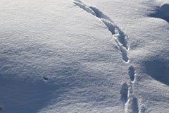 Voetstappen in de grote sneeuw stock foto