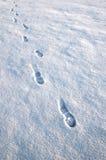 Voetstappen in de sneeuw Stock Afbeeldingen