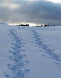 Voetstappen in de sneeuw royalty-vrije stock foto's