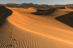Voetstappen in de woestijn Stock Fotografie