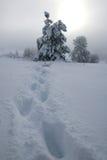 Voetstappen door een blizzard Royalty-vrije Stock Fotografie