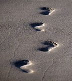 Voetstappen in het zand Stock Afbeelding