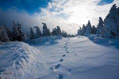 Voetstappen in ingesneeuwd landschap royalty-vrije stock foto