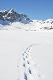 Voetstappen op de sneeuw stock foto