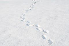 Voetstappen op de sneeuw Royalty-vrije Stock Afbeeldingen