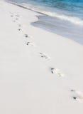 Voetstappen op het zand van het strand Royalty-vrije Stock Foto