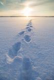 Voetstappen op sneeuw bij een bevroren meer stock afbeeldingen