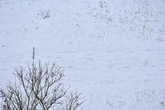 Voetstappen op sneeuw in het park stock afbeelding