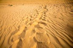 Voetstappen op woestijn stock afbeeldingen