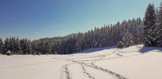 Voetstappen in sneeuw stock foto's