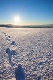 Voetstappen in sneeuw stock afbeelding
