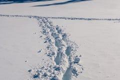 Voetstappen in sneeuw royalty-vrije stock afbeelding
