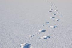 Voetstappen in sneeuw royalty-vrije stock fotografie