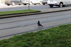 Vogelüberfahrt-Trameisenbahn in der Straße Lizenzfreie Stockfotografie