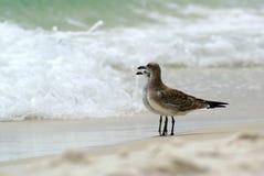 Vogelüberwachen? Lizenzfreie Stockfotos