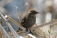 Vogel-Überwachen Lizenzfreie Stockbilder
