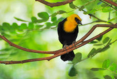 Vogel 005 Royalty-vrije Stock Foto