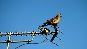 Vogel   royalty-vrije stock afbeelding