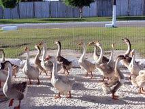 Vogel royalty-vrije stock afbeeldingen