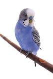 Vogel Lizenzfreies Stockfoto