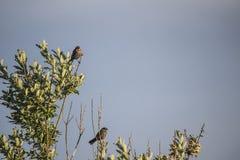 Vogel Stockbilder