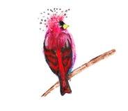 Vogel Stock Afbeeldingen