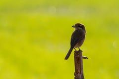 Vogel stock afbeelding