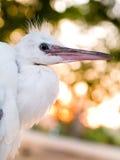 Vogel Lizenzfreie Stockfotografie