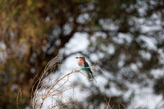 vogel Stockfotos