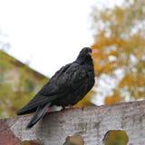 vogel Stockfoto