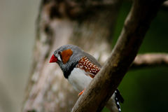 Vogel Royalty-vrije Stock Foto