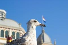 vogel Stock Foto