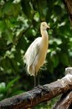 Vogel Lizenzfreies Stockbild