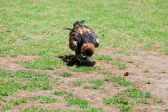 Vogel aan de grond Stock Fotografie