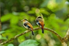 Vogel in aard Royalty-vrije Stock Afbeelding