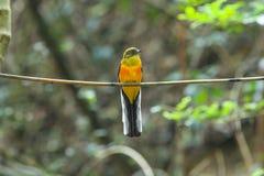 Vogel in aard Stock Afbeelding