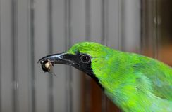 Vogel in actie Royalty-vrije Stock Foto's