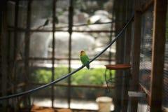 Vogel allein im Käfig Lizenzfreie Stockfotografie