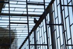 Vogel außerhalb des Käfigs Stockfotos