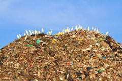 Vogel auf Abfall Stockfotografie