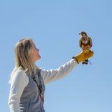 Vogel auf Anzeige Stockfotos