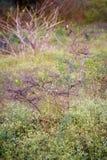 Vogel auf Baum lizenzfreie stockfotos