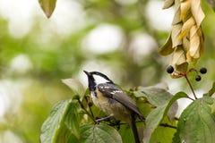 Vogel auf Baum Stockfoto