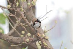 Vogel auf Baum Lizenzfreies Stockfoto
