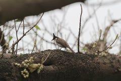 Vogel auf Baum Stockbild