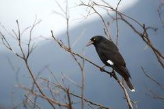 Vogel auf Baum Lizenzfreies Stockbild