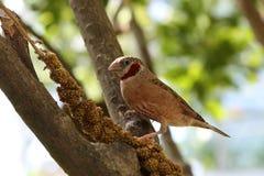 Vogel auf Baum Stockbilder