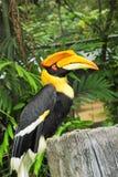 Vogel auf Baum in der Natur Lizenzfreie Stockfotografie